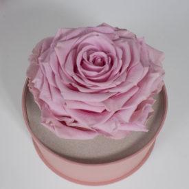 Стабилизированные розы в брендовой упаковке