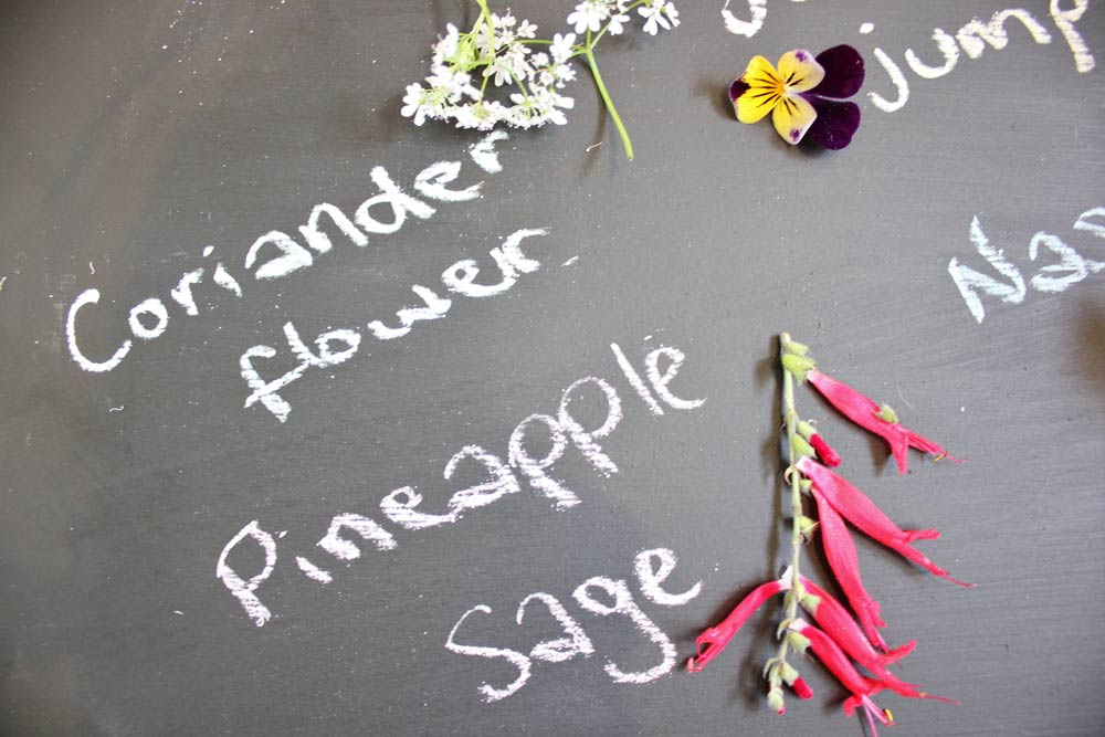 pineapple-sage