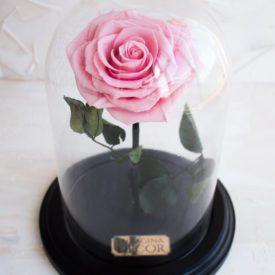 Неувядающая-роза-в-колбе