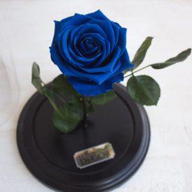 Роза-в-колбе-иваново