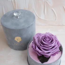 Стабилизированная-роза-королевского-размера-в-бархатной-коробочке