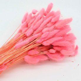 Купить-розовый-лагурус