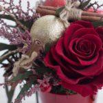 Red-rose-Winter-2018