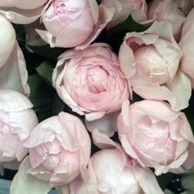 Пиони Пинк Розы фото