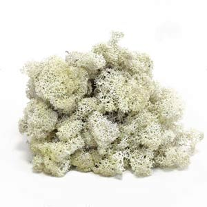 Белый-мох-ягель