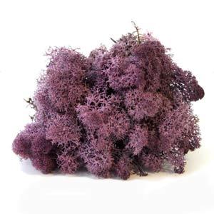 Фиолетовый-мох-ягель