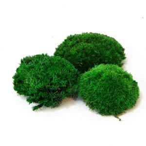 Кочки-мох-зеленый