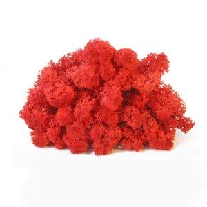 Красный-мох-ягель