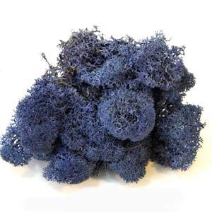 Синий-ягель-мох