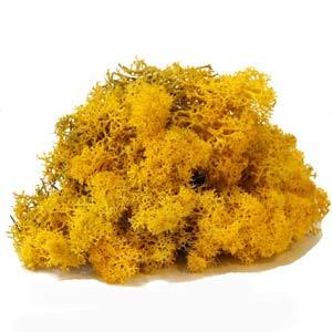 Жёлтый-мох-ягель
