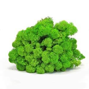 Зелёная-трава-мох-ягель