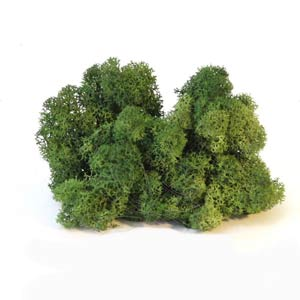 Зелёный-изумруд-мох-ягель