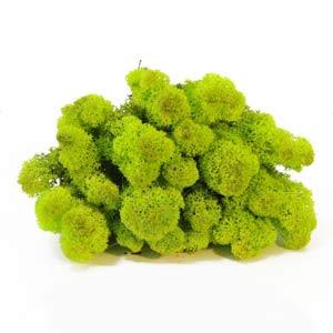 Зелёный-весенний-мох-ягель