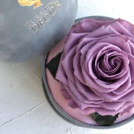 Роза необычная