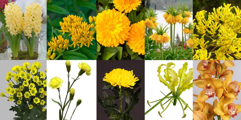 CeylonYellow-colour-flowers