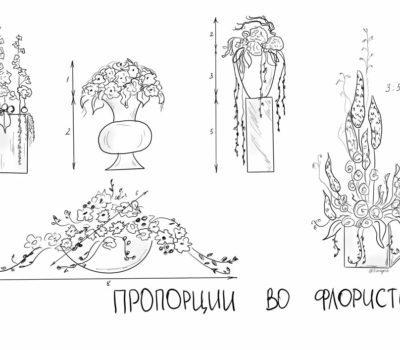 Золотое сечение и правила пропорций для флористов