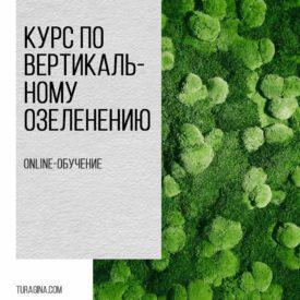 Курс-по-вертикальному-озеленению-из-стабилизированных-растений