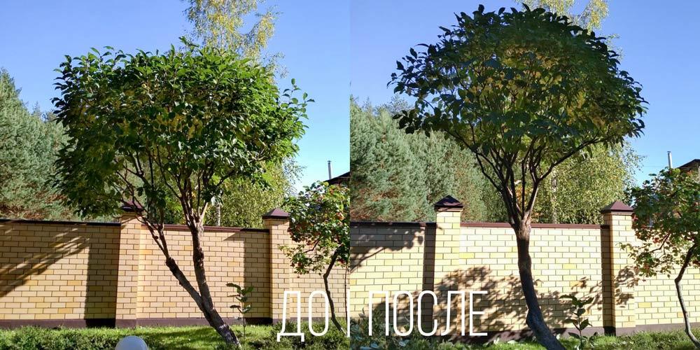 Деревья-на-участке