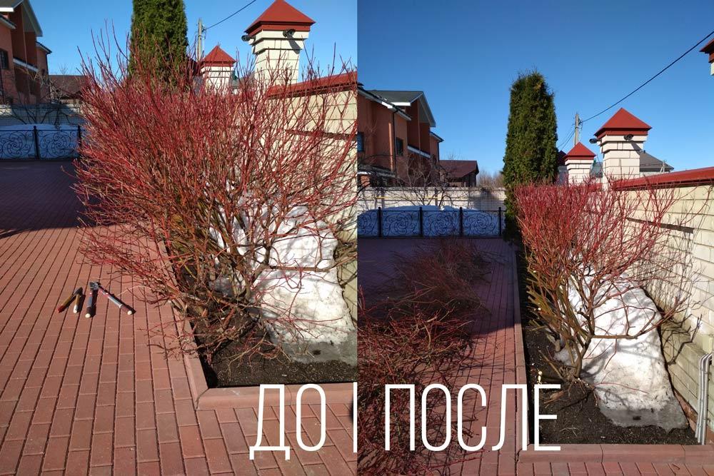 Омолаживающая-стрижка-кустраников-Иваново