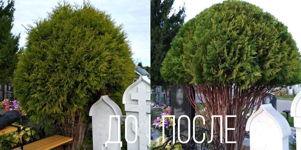 Озеленение-и-благоустройство-на-кладбище