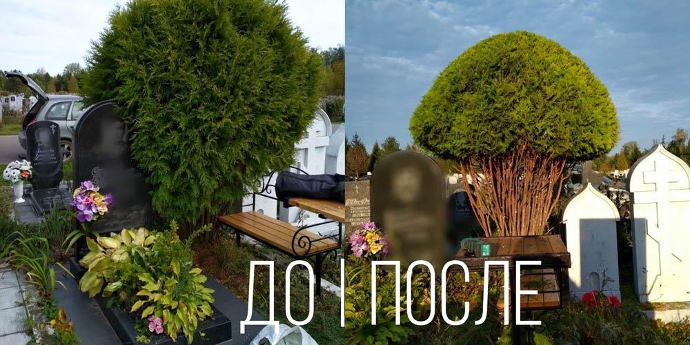 Озеленение-кладбищенских-участков