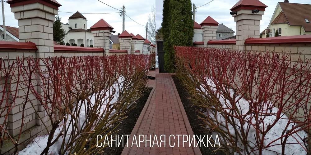 Санитарная-стрижка-в-Иваново-и-области