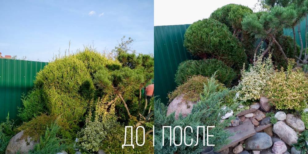 Топиарная-стрижка-туи-в-Иваново