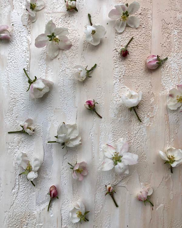 Цветы-яблони-на-красивом-фоне